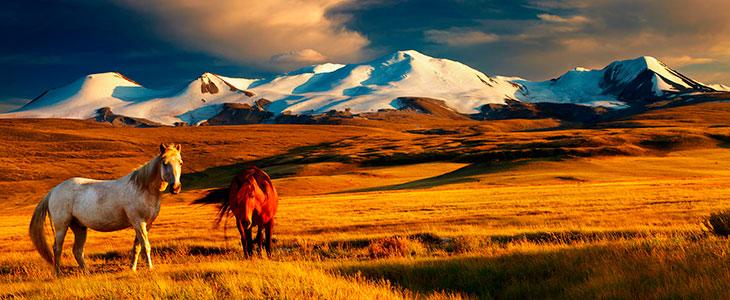 Нужна ли виза в монголию